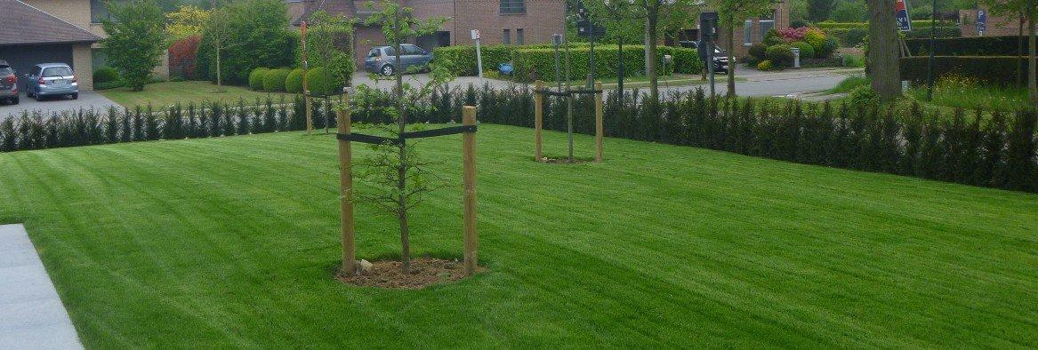 Een felgroen vers aangelegd gazon met 2 nieuw aangeplante boompjes
