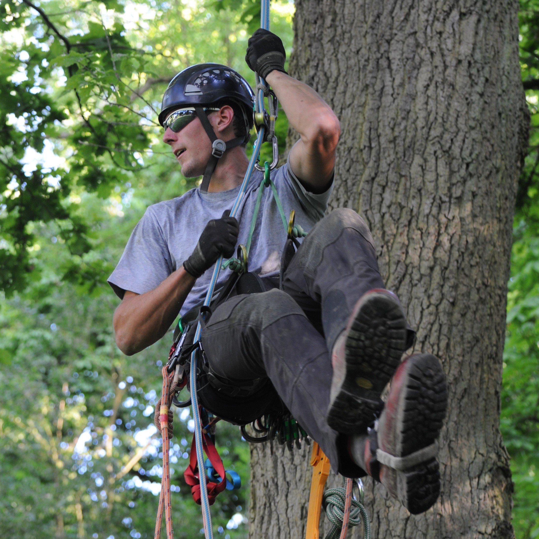 Een gecertififieerd touwtechnieker hangt op hoogte in een boom