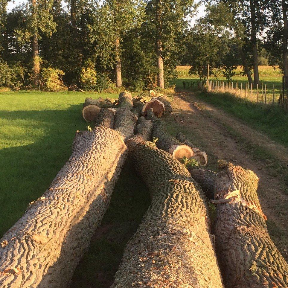 Gevelde bomen klaar om afgevoerd te worden