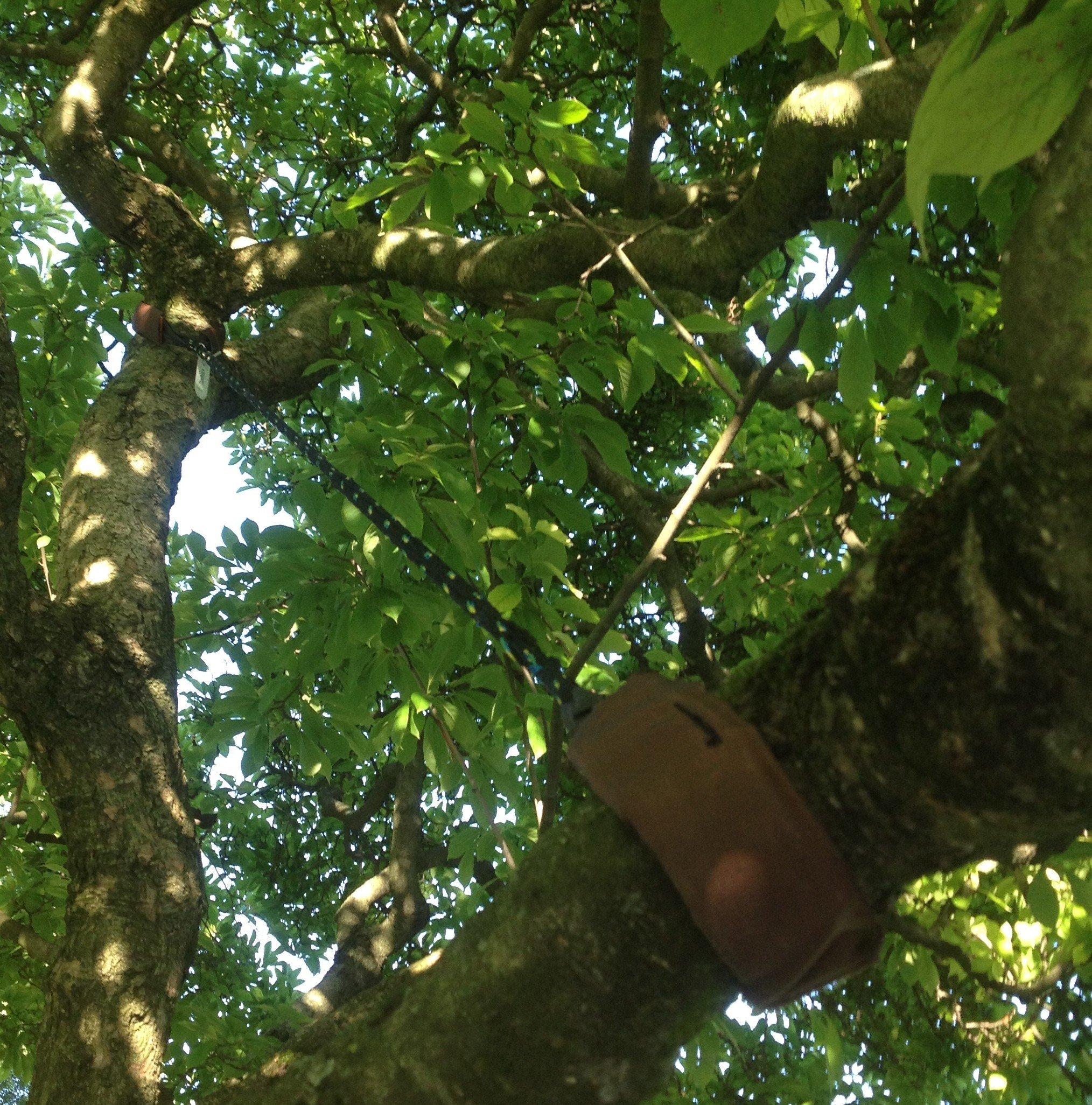 Verankering van een tak om toekomstige schade te voorkomen